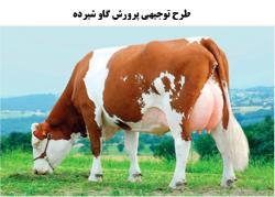 طرح توجیهی پرورش گاو شیری