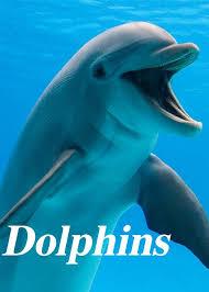 دانلود تحقیق دلفین