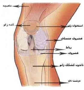تحقیق بررسی عوامل آناتومیک و بیومکانیک ایجاد کننده اختلالات مفصل زانو و درمان آنها